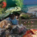 Tausafariprogramm Galapagos