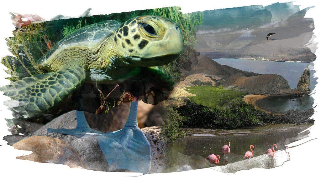 Tauchsafariprogramm Galapagos